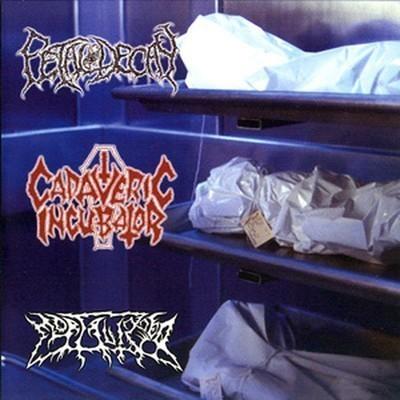 Cadaveric Incubator / Fetal Decay / Mortalized - 3 Way SplitCD (CD)